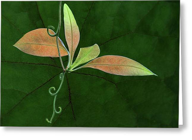 Tendril - Leaves Greeting Card by Nikolyn McDonald