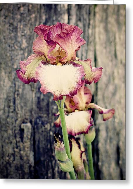 Rocks Greeting Cards - Tennessee Iris Greeting Card by Heather Applegate