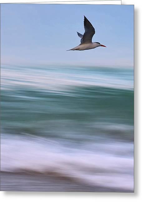 Tern Flight Vert Greeting Card by Laura Fasulo
