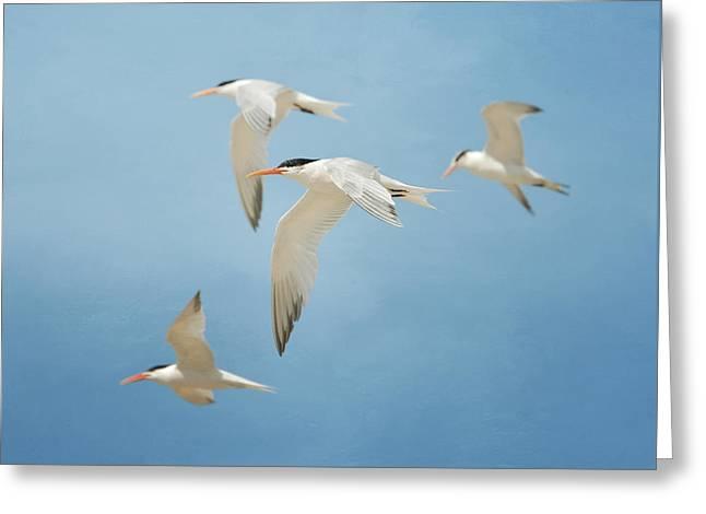 Tern Quartet Greeting Card by Fraida Gutovich