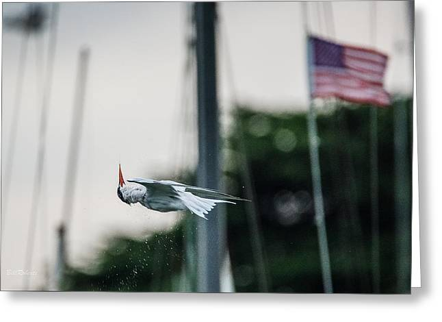 Moss Landing California Greeting Cards - Tern Upside Down Greeting Card by Bill Roberts