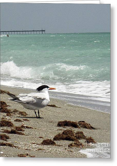 Tern Greeting Cards - Terns View GP Greeting Card by Chris Andruskiewicz