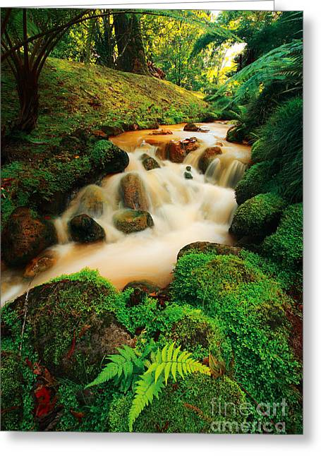 Intense Color Greeting Cards - Terra Nostra - Azores Greeting Card by Gaspar Avila