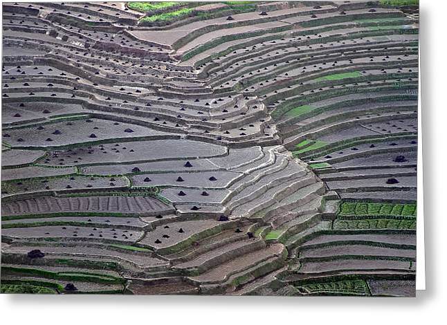 Nepal Greeting Cards - Terrace Fields Greeting Card by Ajay Pant