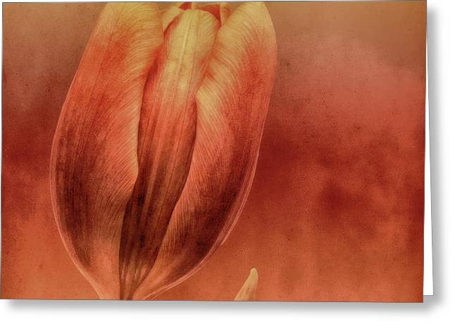 Abstract Digital Photographs Greeting Cards - Terracotta Greeting Card by Wim Lanclus