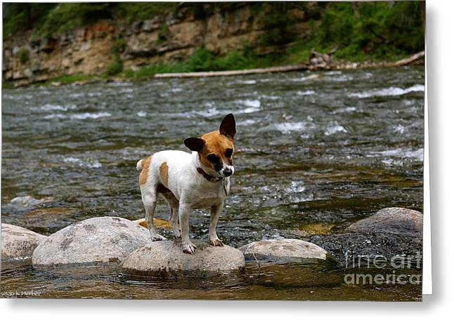 Gallatin River Greeting Cards - Terrier Fishing Greeting Card by Susan Herber