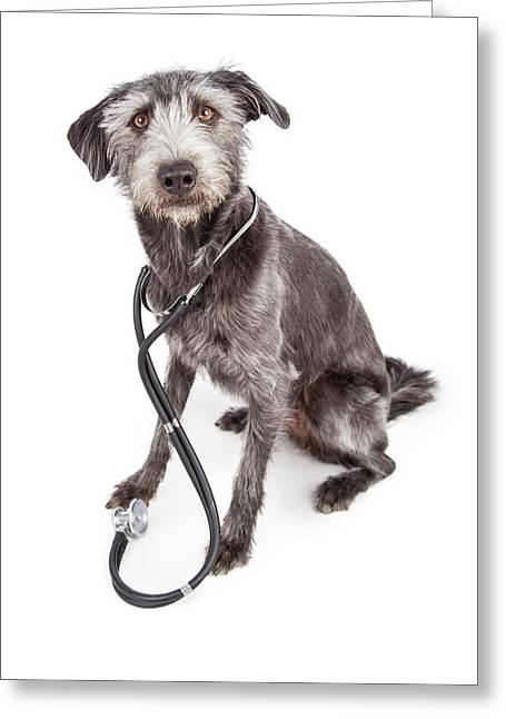 Vet Photographs Greeting Cards - Terrier Veterinary Dog Wearing Stethoscope Greeting Card by Susan  Schmitz
