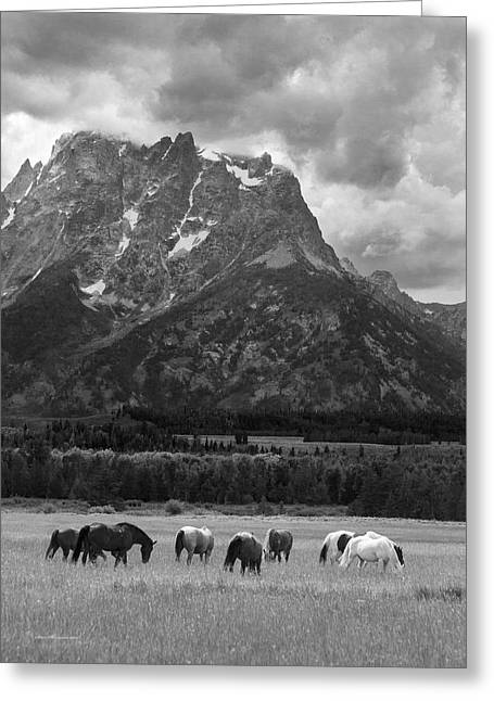 The Horse Greeting Cards - Teton storms and horses Wyoming Greeting Card by Sam Sherman