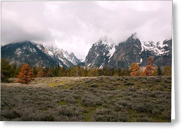 Tetons Greeting Card by Amanda Kiplinger