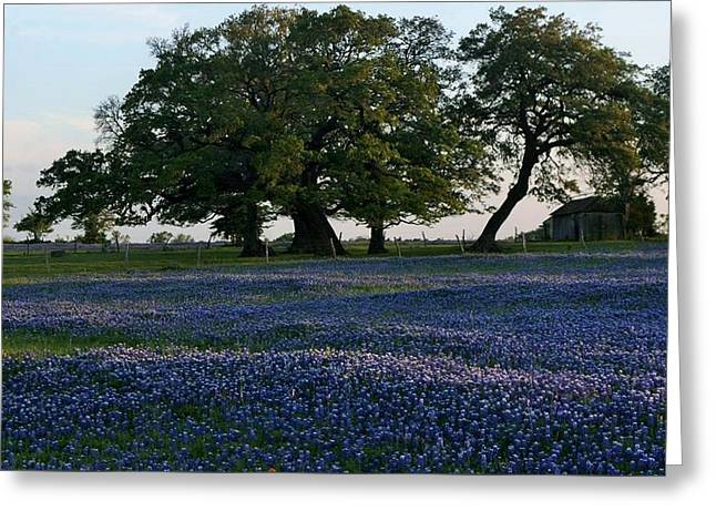 Flower Jewelry Greeting Cards - Texas Backroads Greeting Card by John  Glass