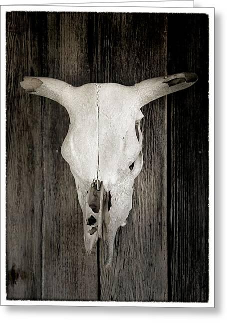 Steer Greeting Cards - Texas Bleached Steer Skull Greeting Card by Stephen Stookey