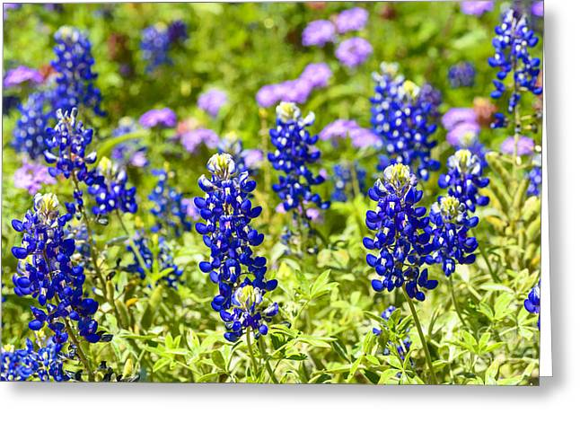Wildseed Greeting Cards - Texas Bluebonnets  Greeting Card by Thomas R Fletcher
