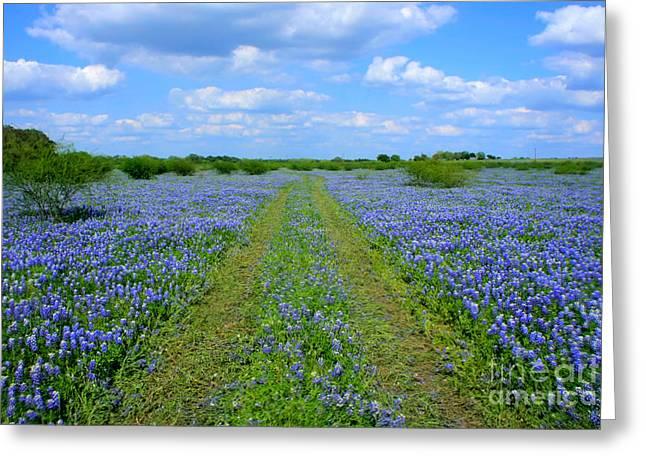 Will Cardoso Greeting Cards - Texas Bluebonnets Greeting Card by Will Cardoso