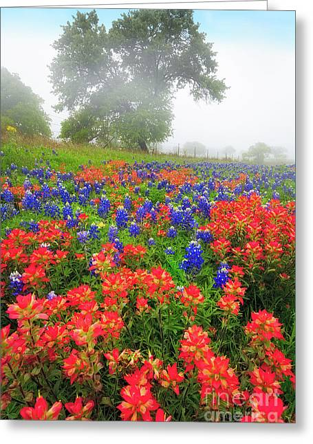 Foggy Landscapes Greeting Cards - Texas Country Greeting Card by Inge Johnsson