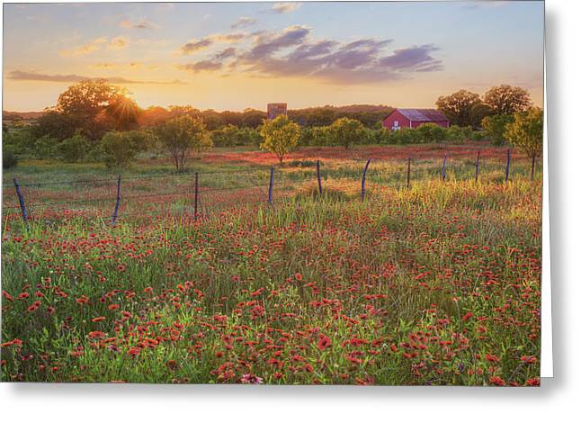 Wildflower Photos Greeting Cards - Texas HIll Country Wildflowers at Sunset 1 Greeting Card by Rob Greebon
