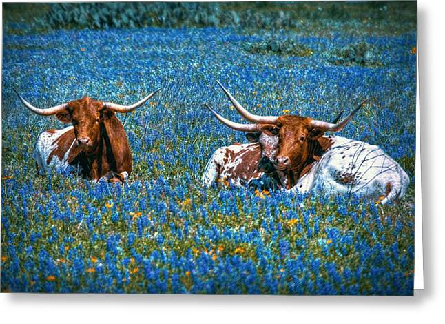 Texas Longhorn In Bluebonnets Greeting Cards - Texas in Blue Greeting Card by Linda Unger