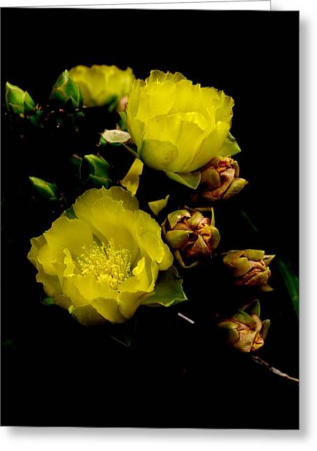 Texas Rose Vii Greeting Card by James Granberry
