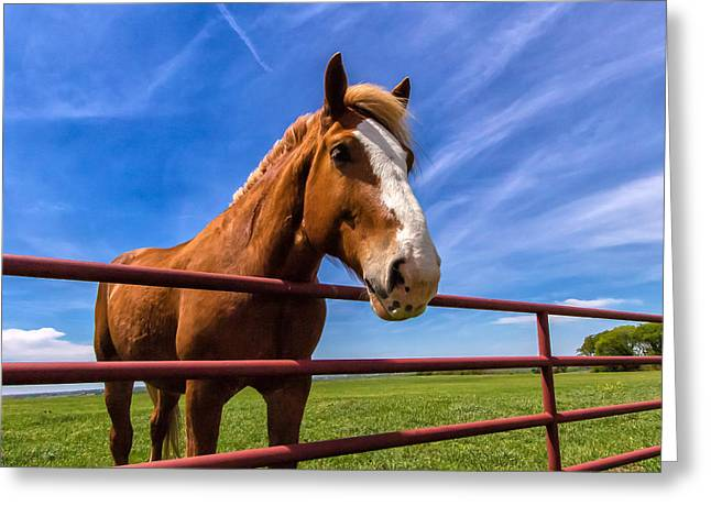 Race Horse Greeting Cards - Texas Thorough Bred Horse Greeting Card by Robert Bellomy