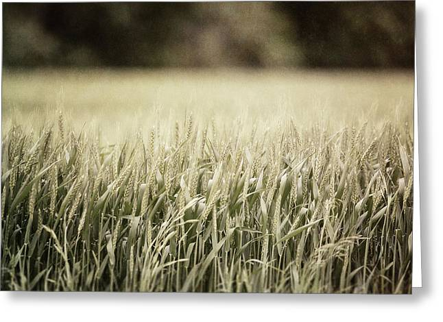 Olive Green Greeting Cards - Texas Wheat Field Landscape Greeting Card by Lisa Russo