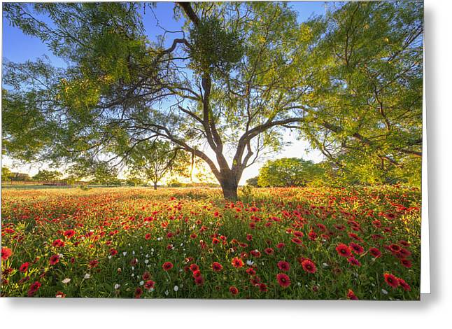 Wildflower Photos Greeting Cards - Texas Wildflower Evening in the Hill Country 2 Greeting Card by Rob Greebon
