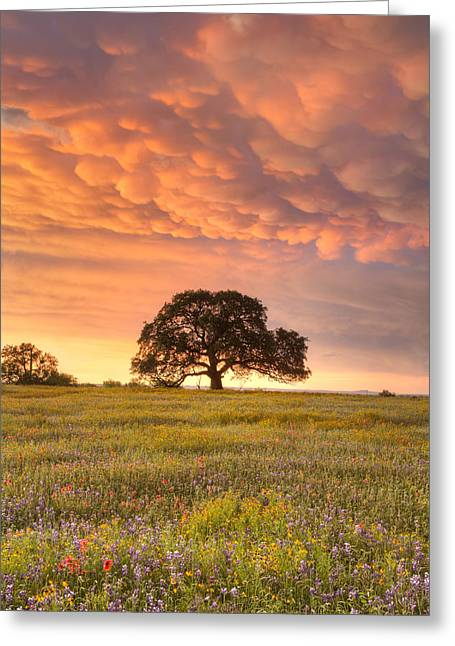 Wildflower Photos Greeting Cards - Texas Wildflowers after the Storm 2 Greeting Card by Rob Greebon