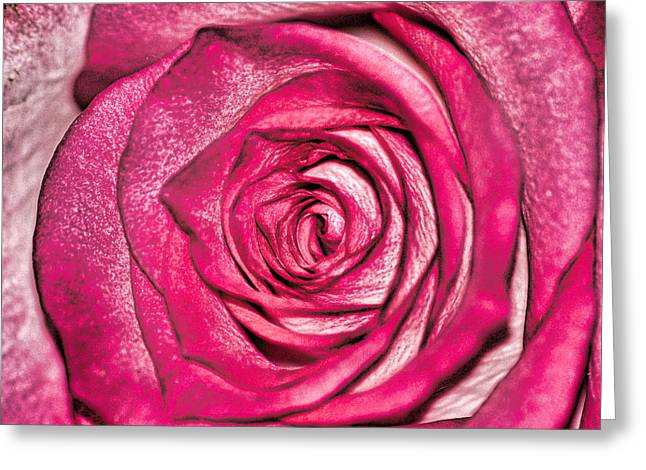 Texture Of A Rose Greeting Card by Martin Newman