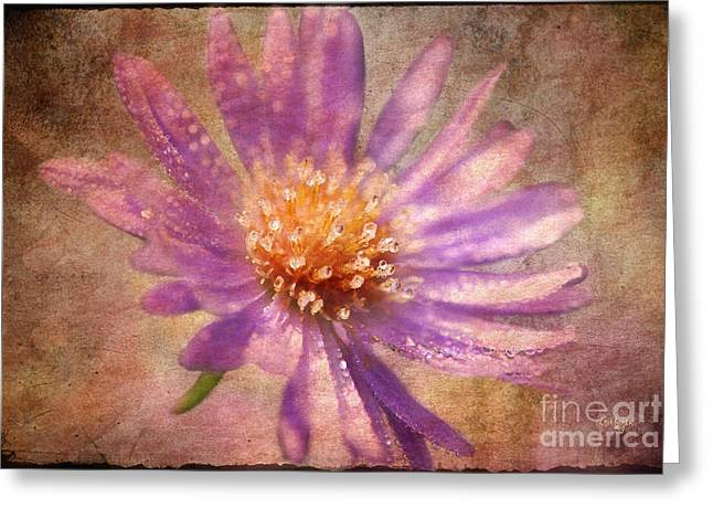 Aster Digital Art Greeting Cards - Textured Aster Greeting Card by Lois Bryan