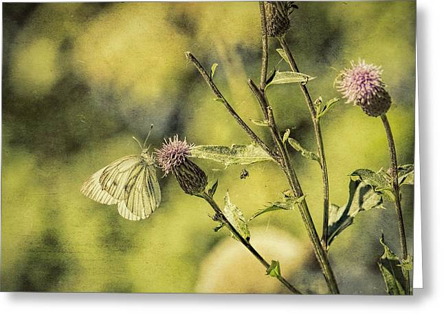Textured Butterdly  Greeting Card by Leif Sohlman