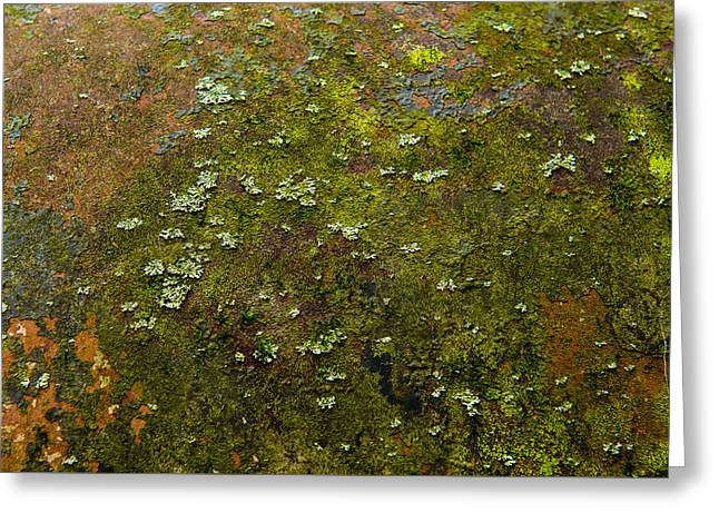 Textured Landscape Greeting Card by Randy Walton