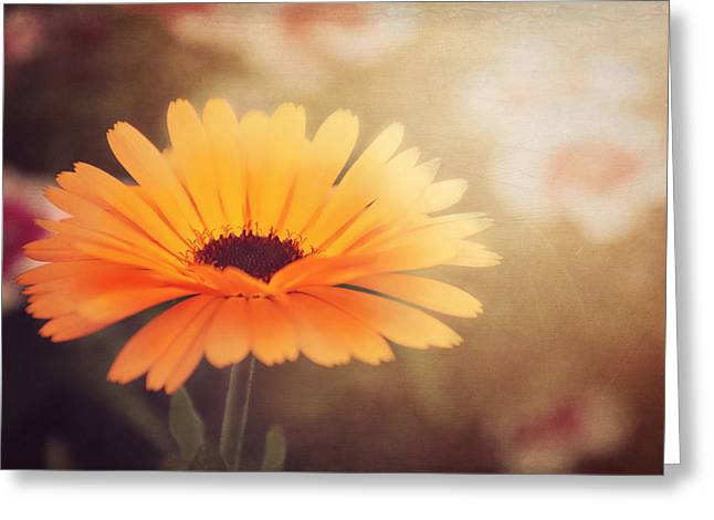 Print Photographs Greeting Cards - Textured Marigold Greeting Card by Carol Japp