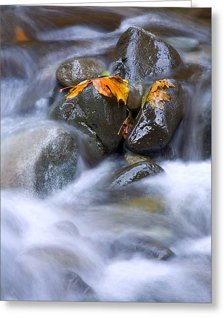 Stream Greeting Cards - Textures of Autumn Greeting Card by Mike  Dawson