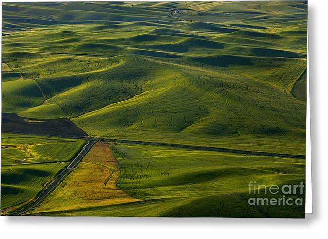 Textures Of The Palouse Greeting Card by Mike Dawson