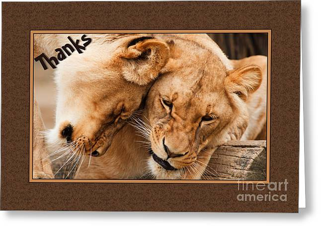 Lioness Greeting Cards - Thanks Lioness Greeting Card by JH Designs