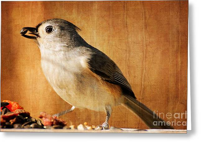 Gray Bird Greeting Cards - Thanksgivings Bounty Greeting Card by Lois Bryan