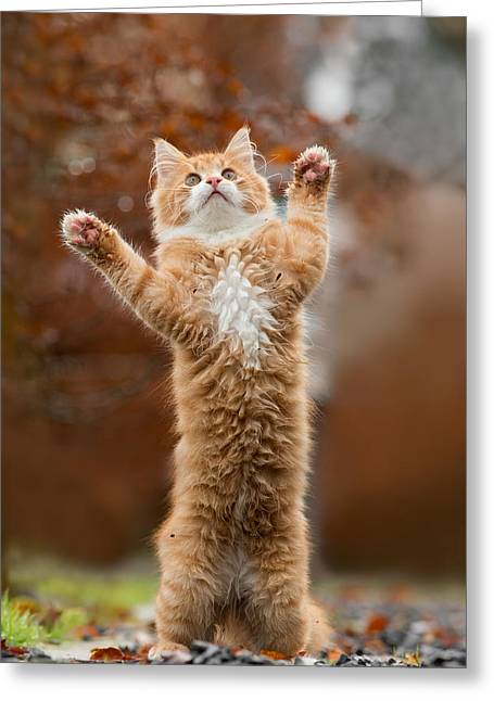 That Mouse Was This Big -red Haired Kitten Greeting Card by Roeselien Raimond