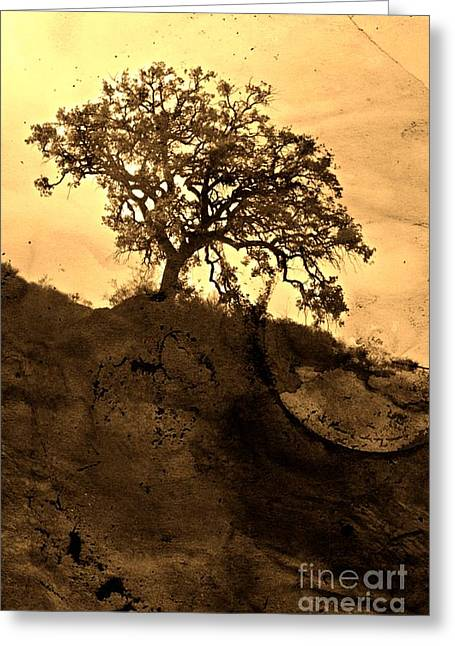 The Hills Greeting Cards - That Old Tree Greeting Card by Clare Bevan