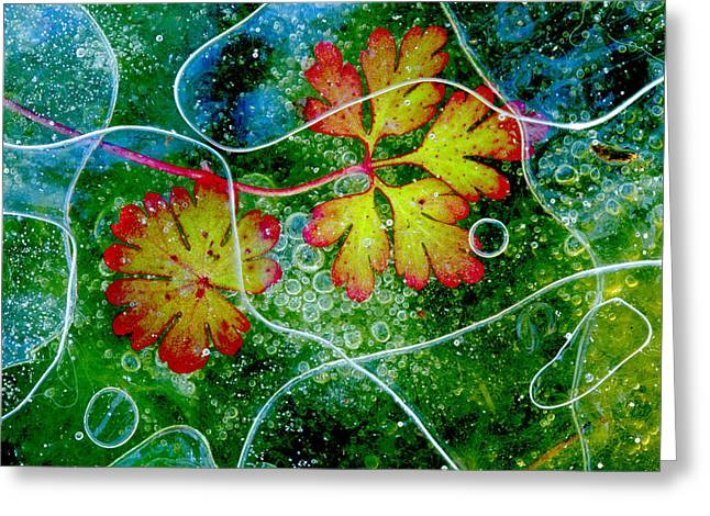 Geraniums Greeting Cards - Thaw Greeting Card by Andres Miguel Dominguez