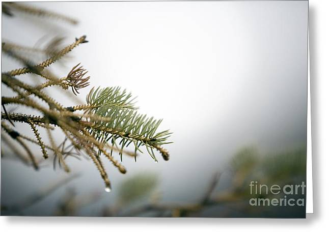 Thaw Greeting Card by Jeannie Burleson