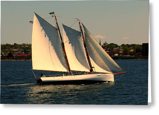 Boat Cruise Greeting Cards - The Adrondack Newport Greeting Card by Tom Prendergast