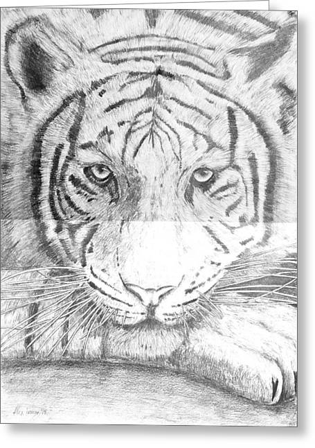 The Tiger Drawings Greeting Cards - The Amur Tiger Greeting Card by Alexander Ivanov