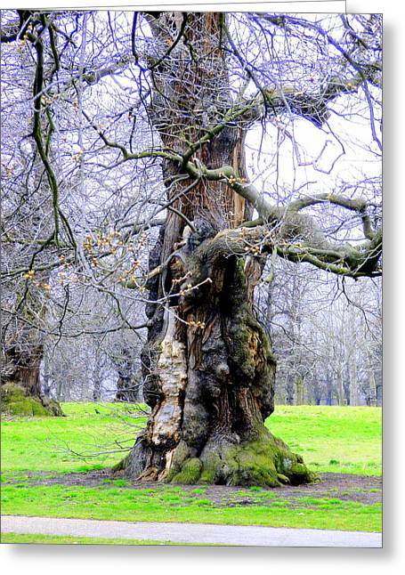 The Ancient Trees Of London Greeting Card by Mindy Newman