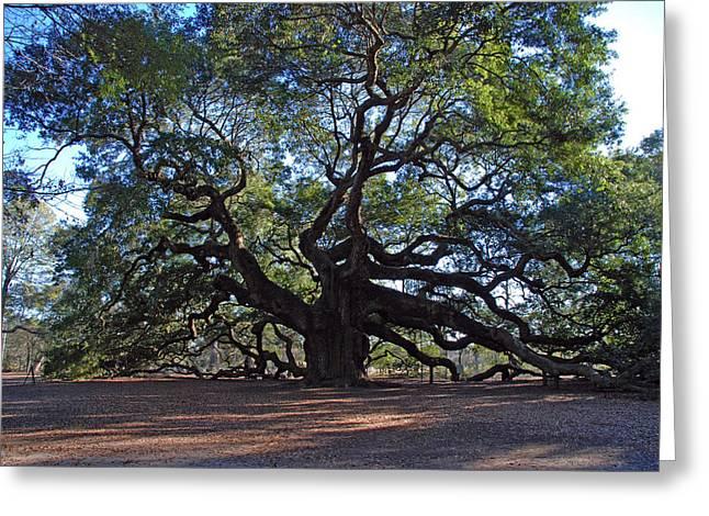 1400 Greeting Cards - The Angel Oak in Spring Greeting Card by Susanne Van Hulst