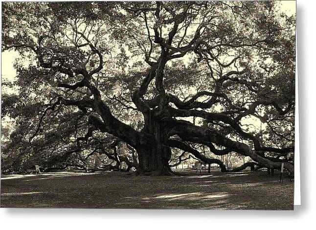 Black And White Photos Greeting Cards - The Angel Oak Greeting Card by Susanne Van Hulst