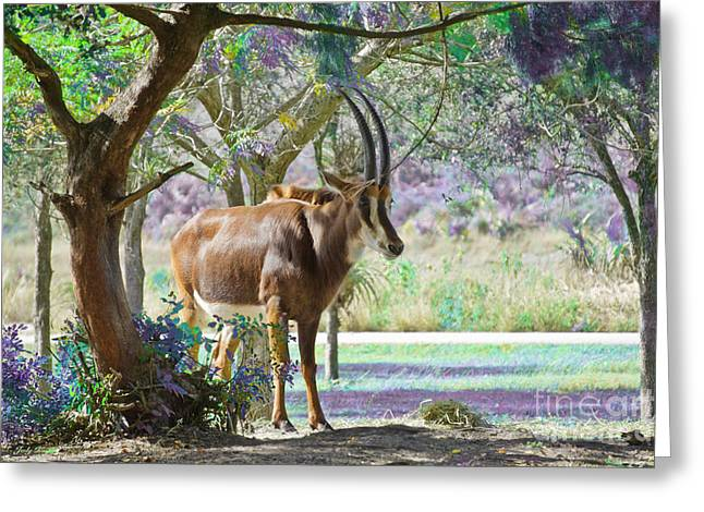 Wild Animals Greeting Cards - The Antelope Greeting Card by Judy Kay