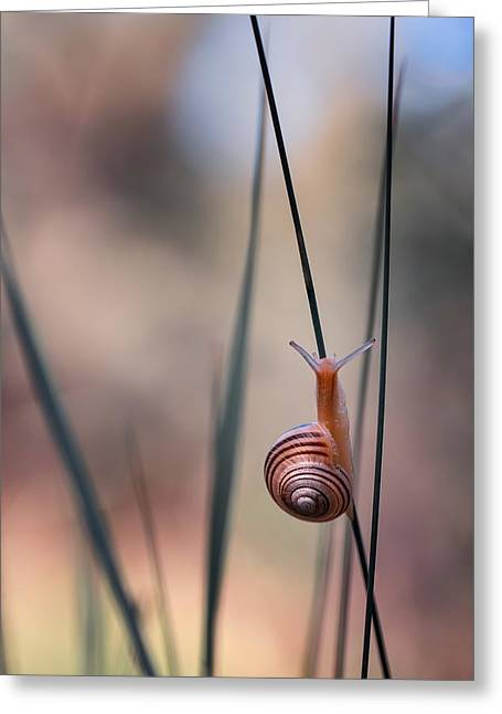 Macro Greeting Cards - The Ascent Greeting Card by Cyril Verron