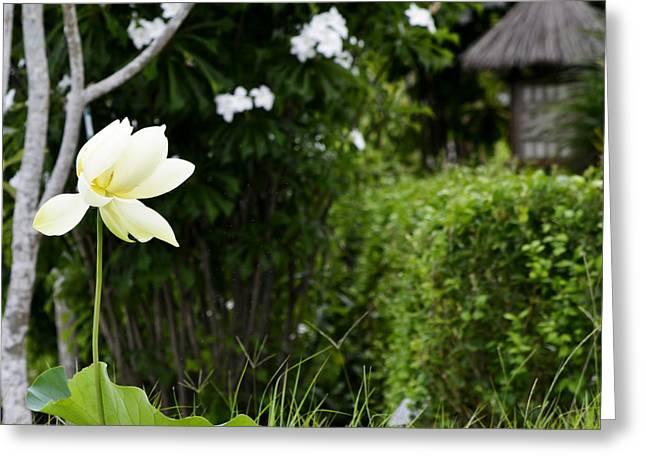 Naples Greeting Cards - The Asian Garden Greeting Card by Melanie Moraga