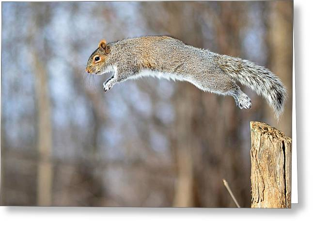 Sciurus Carolinensis Greeting Cards - The athletic squirrel Greeting Card by Asbed Iskedjian
