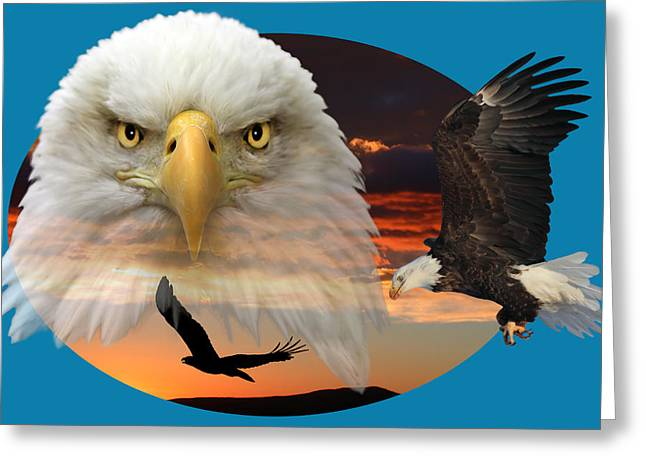 The Bald Eagle 2 Greeting Card by Shane Bechler