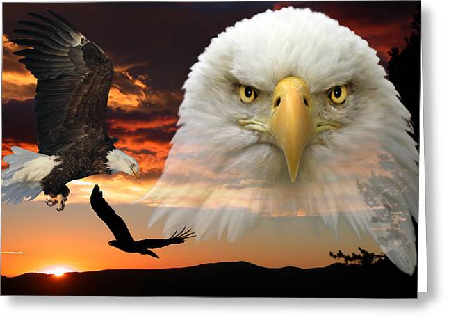 The Bald Eagle Greeting Card by Shane Bechler