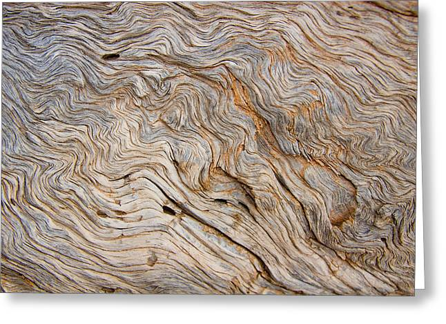 The Bark Of A Pine Is Sandblasted Greeting Card by Taylor S. Kennedy